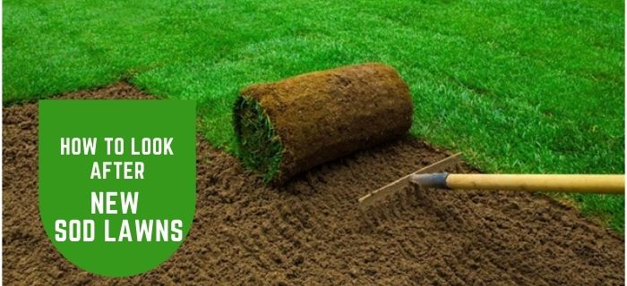 How to Look After New Sod Lawns