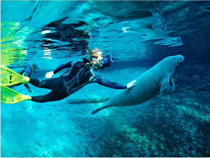 6 Sea Animals You Can Swim With Without Any Fears