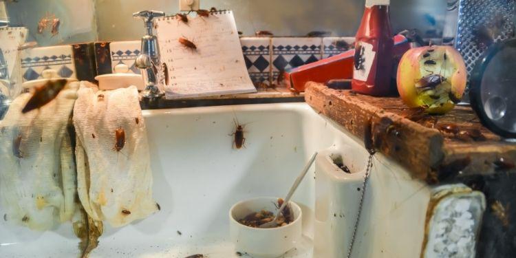 Are-Cockroaches-Dangerous-How-Pest-Control-Professional-Exterminate-Them