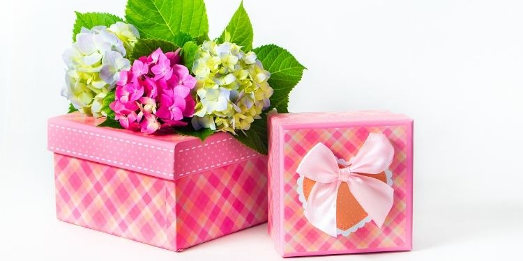 The Hydrangea flower gift for an Apology and Care
