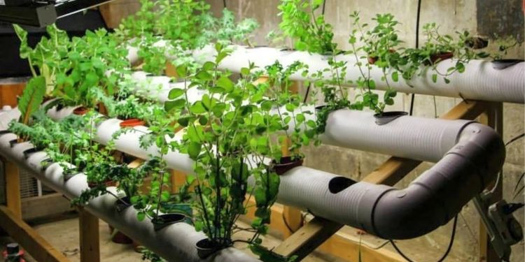 The Ultimate Guide To Hydroponics Nutrients