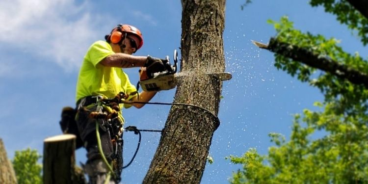 Benefits of Hiring a Tree Surgeon for Tree Removal